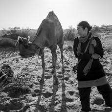 Kamelattacke: Die Kamelledertasche war vielleicht die falsche Entscheidung...